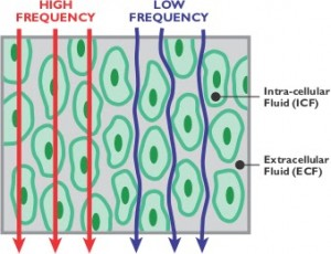 7549_FrequencyChart
